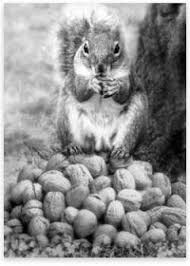 Accumulation Squirrel and Nuts